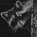 ACEO-Racoon